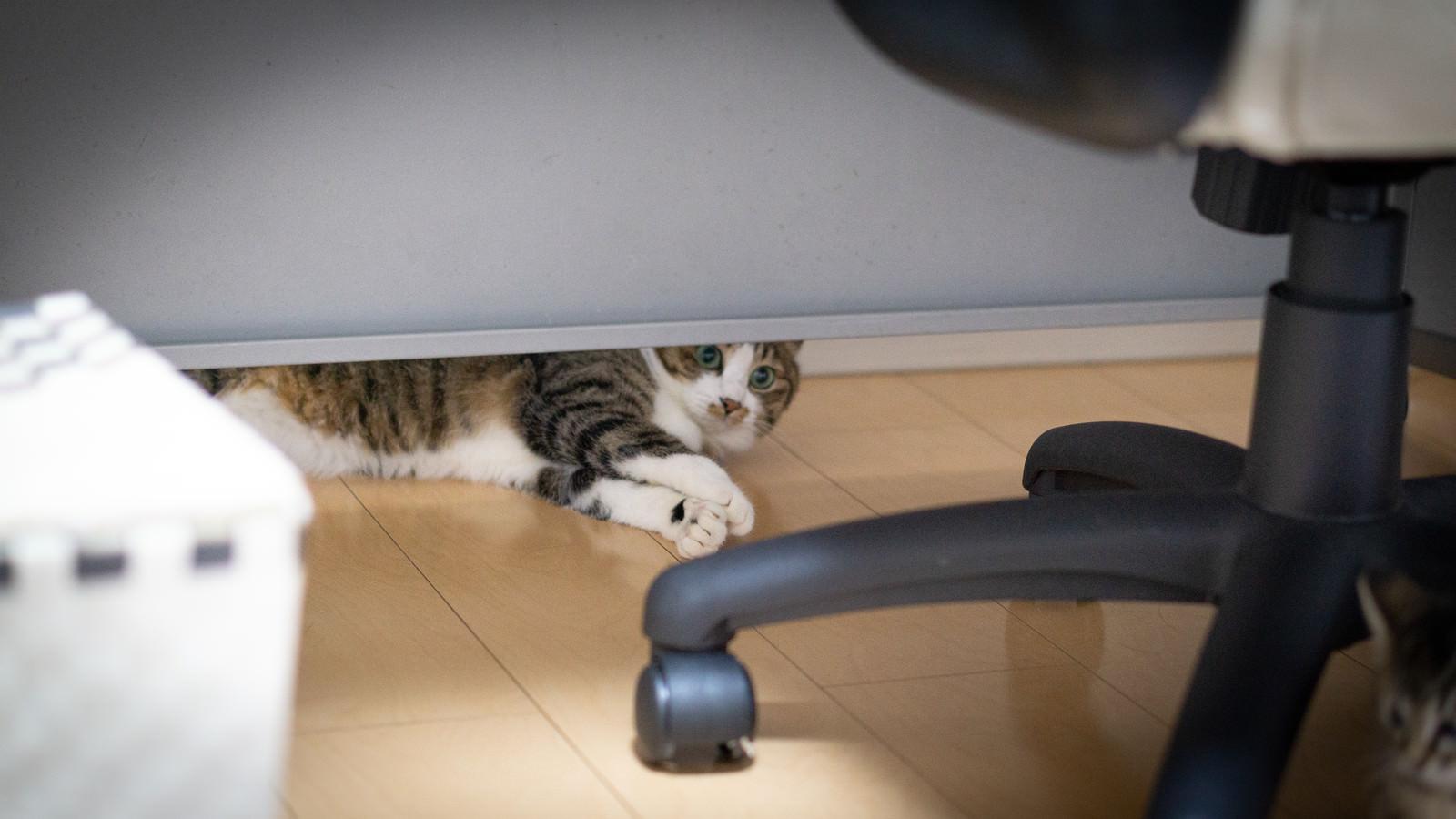 「机の下に入り込んでなかなか出てこない猫」の写真