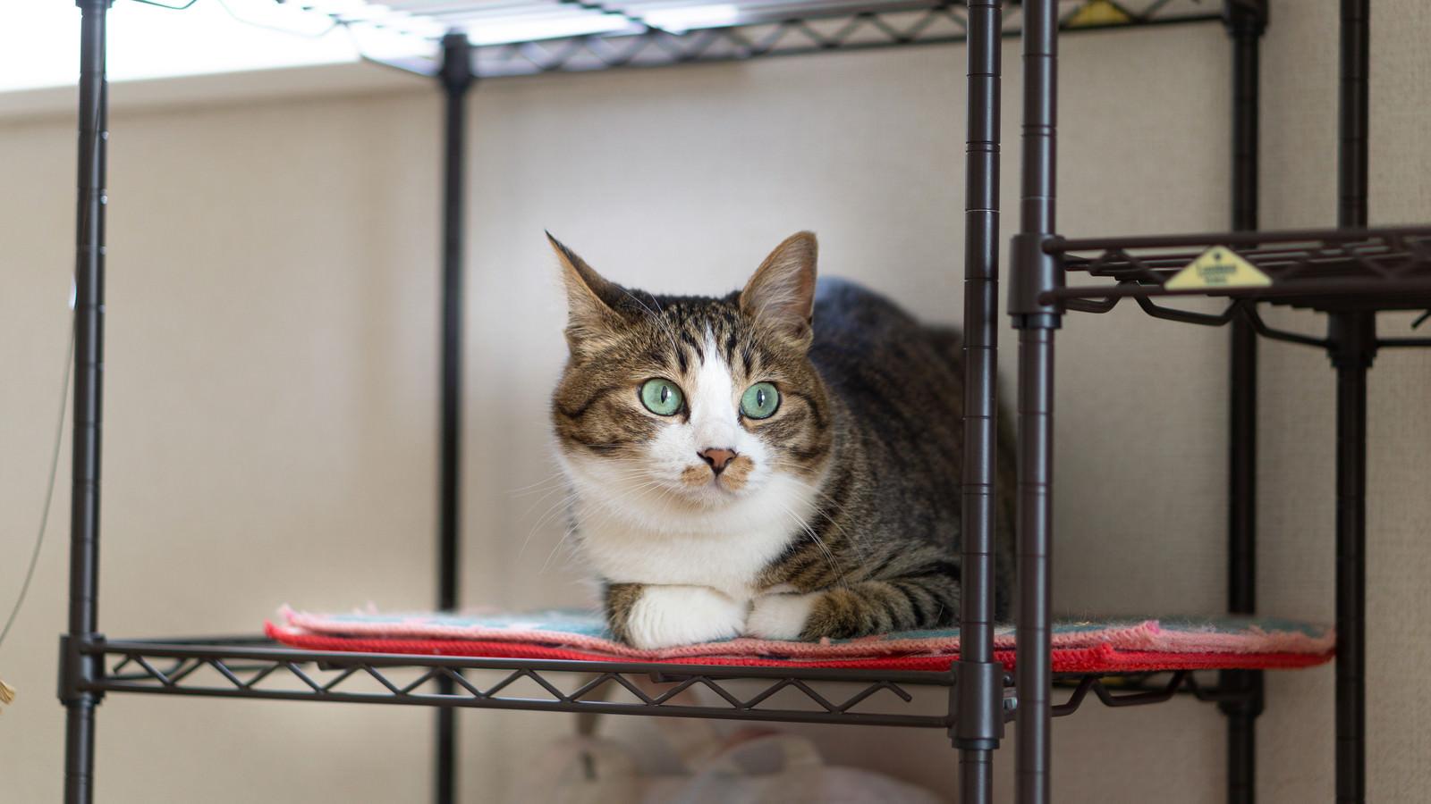 「いたずらがバレた猫」の写真
