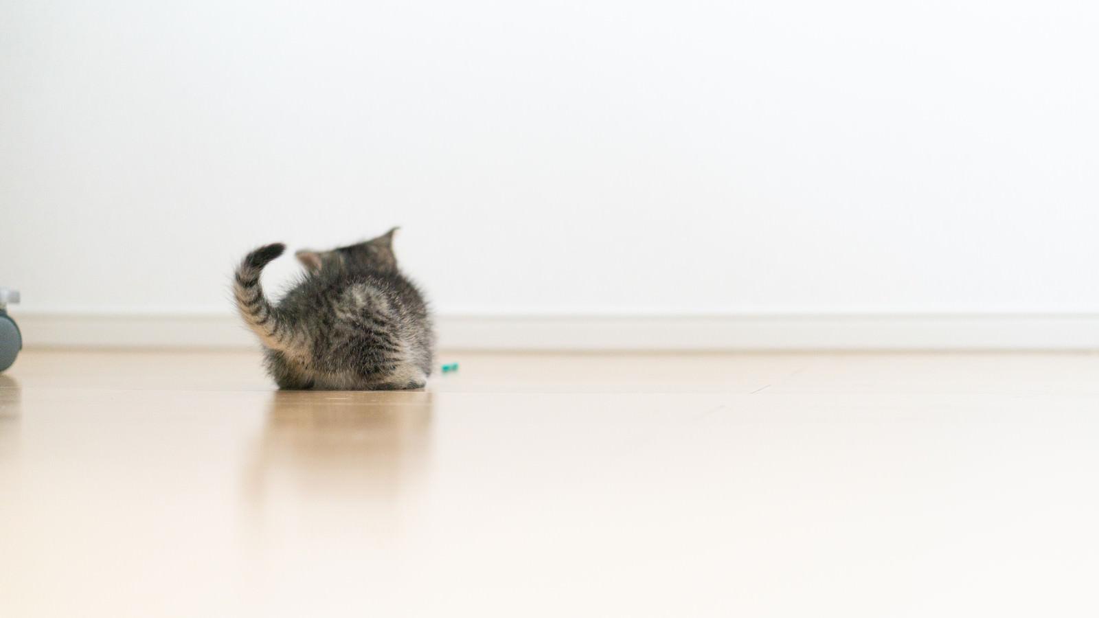 「子猫のしっぽ」の写真