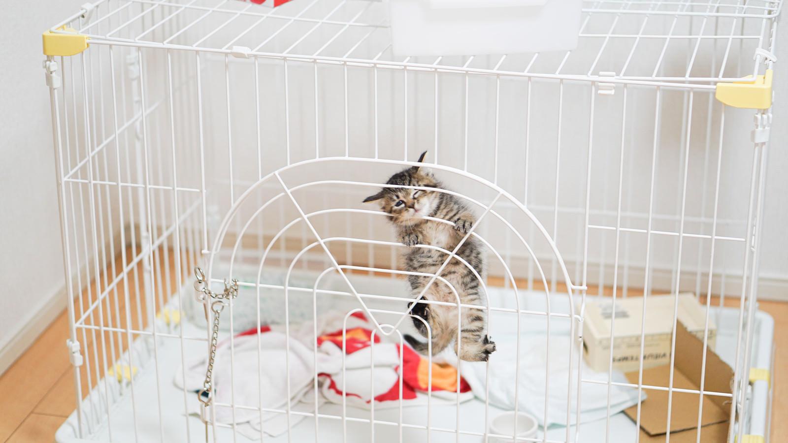 「ゲージから出してくれと必死の子猫氏」の写真