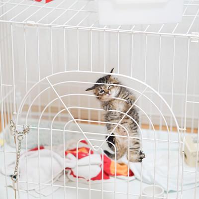 ゲージから出してくれと必死の子猫氏の写真