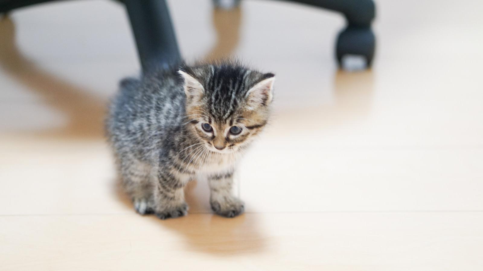 「ひとりぼっちでうなだれる子猫」の写真