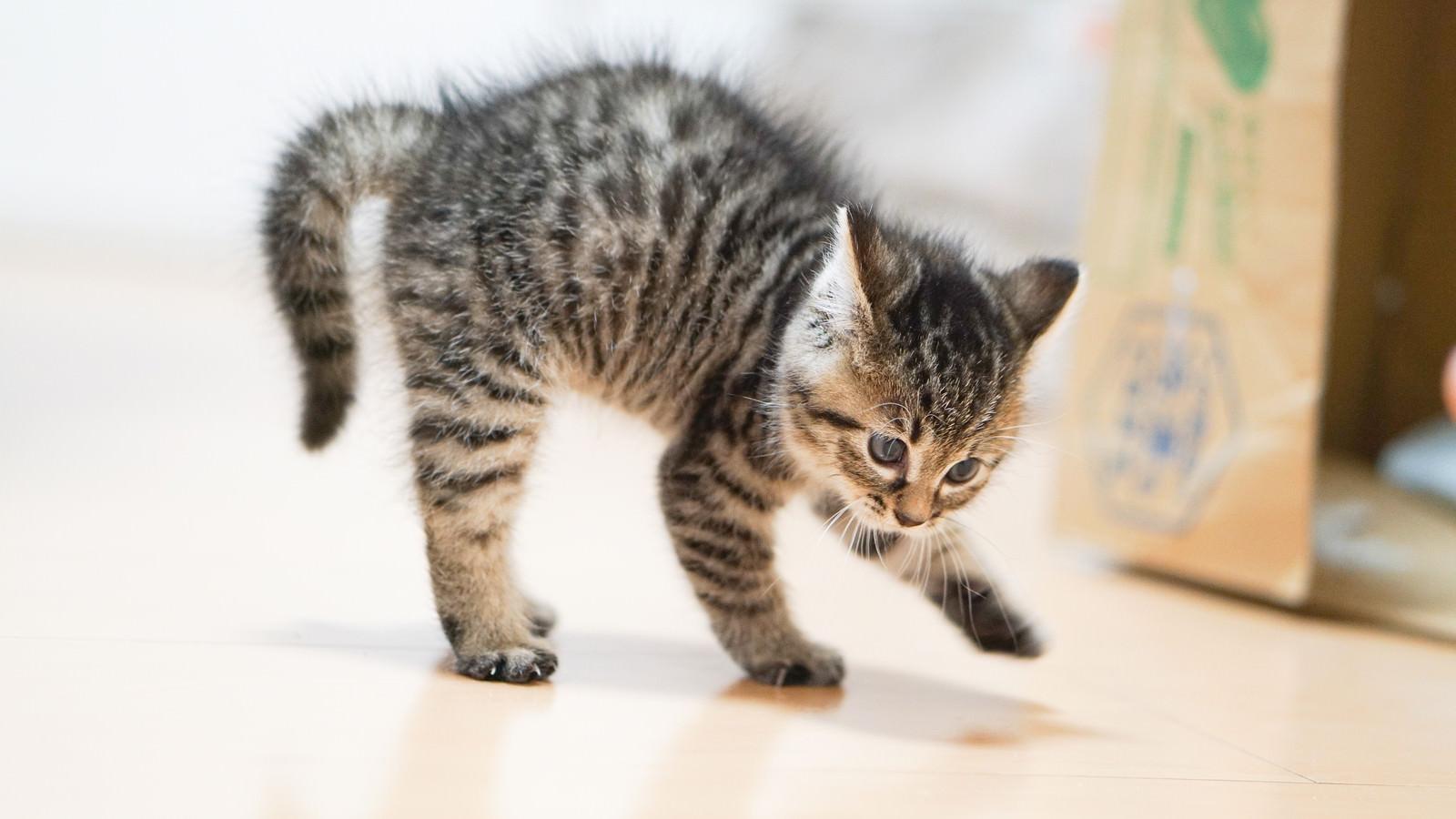 「よちよち歩きの子猫ちゃん」の写真