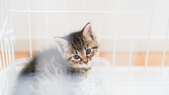 ゲージの中から見つめる子猫ちゃんの写真