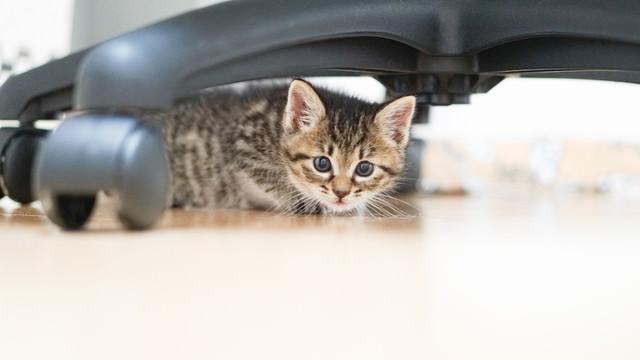 オフィスチェアーの下に隠れる子猫の写真