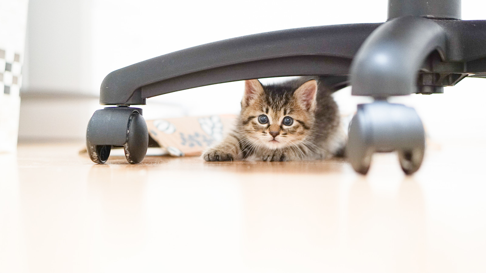 「椅子の下に隠れる子猫ちゃん」の写真