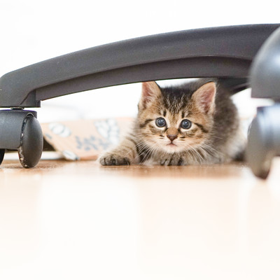椅子の下に隠れる子猫ちゃんの写真