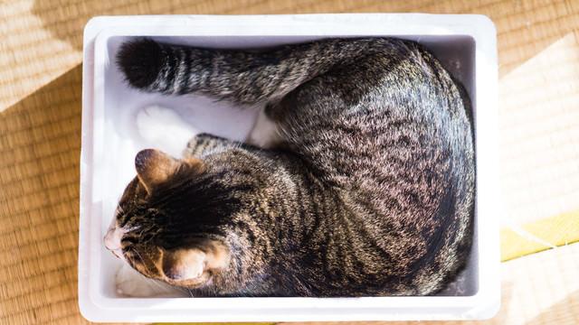 すっぽり箱入り猫の写真