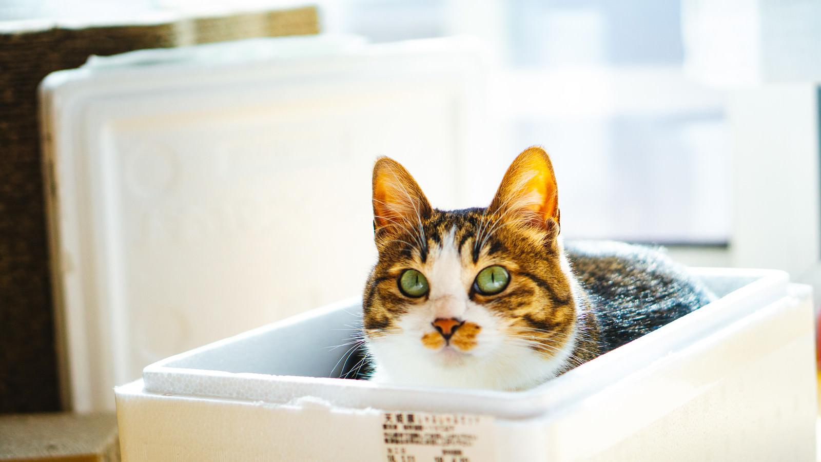 「箱猫」の写真