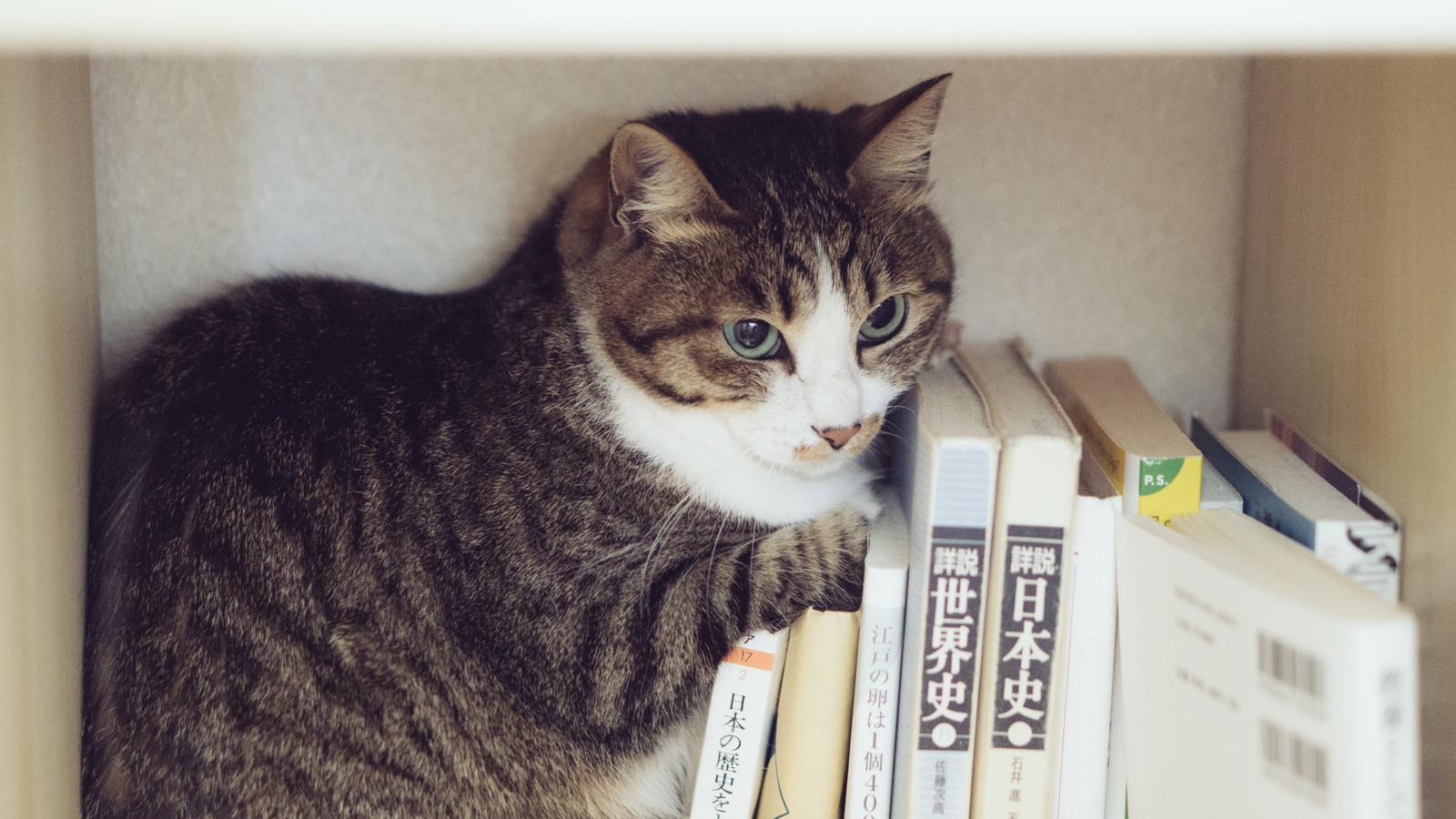 「本棚に隠れるにゃんこ」の写真