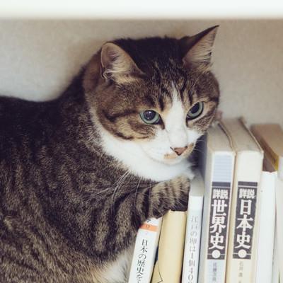 本棚に隠れるにゃんこの写真