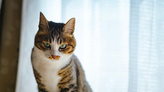 猫の怒りのサインの写真