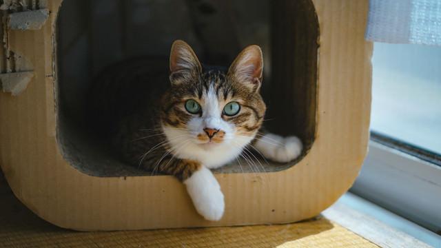 何か用ですか?(猫)の写真