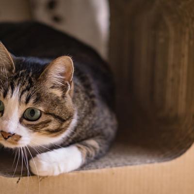 怖がりながらも見てしまう猫の写真