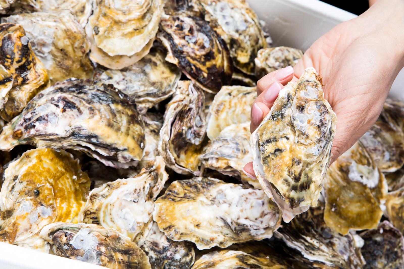 「箱いっぱいの殻付き牡蠣」の写真