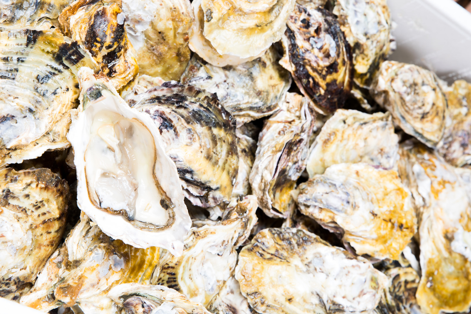 「てんこ盛りの生牡蠣(恵比須かき)てんこ盛りの生牡蠣(恵比須かき)」のフリー写真素材を拡大