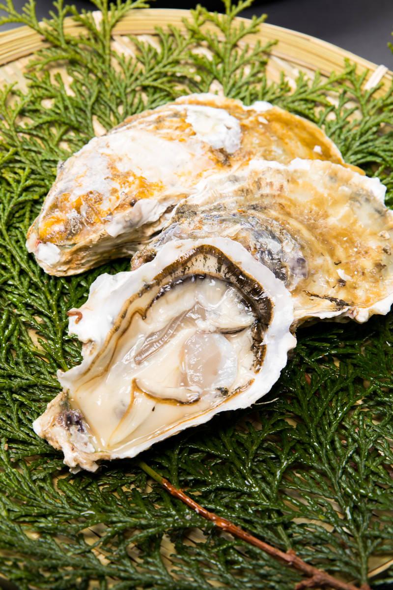 「檜葉と生牡蠣」の写真