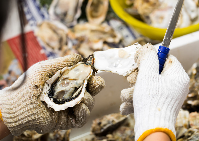 牡蠣の殻をむく様子の写真