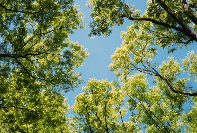 木々の間から見える青空の写真