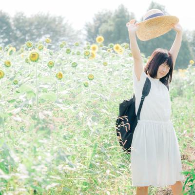 「ひまわり畑で伸びをする女性」の写真素材