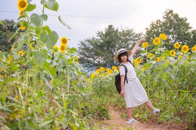 背丈よりも高い向日葵の写真