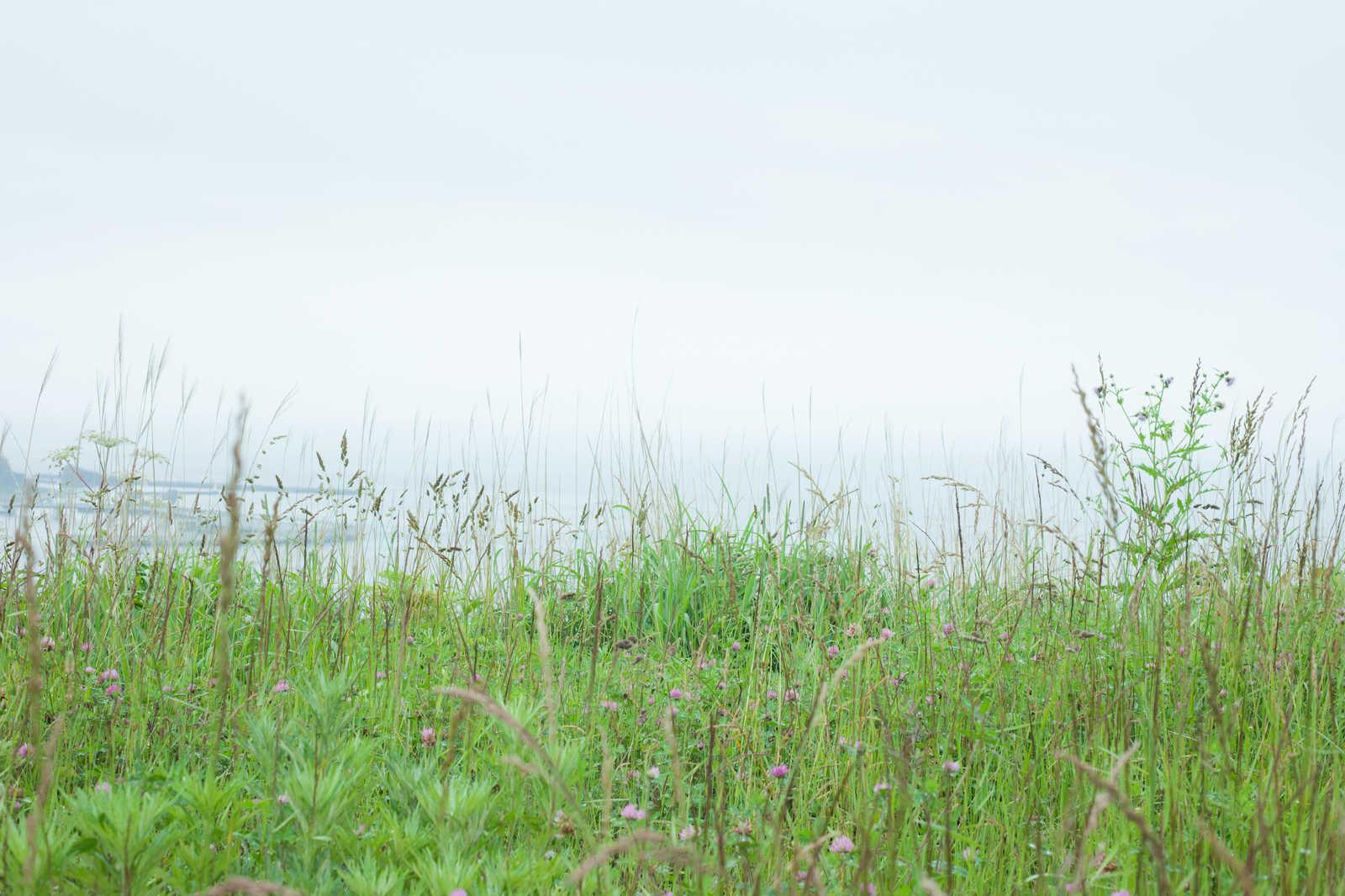 「野原にひとりぼっち」の写真