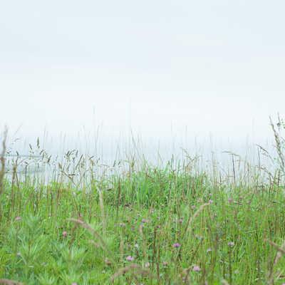 野原にひとりぼっちの写真