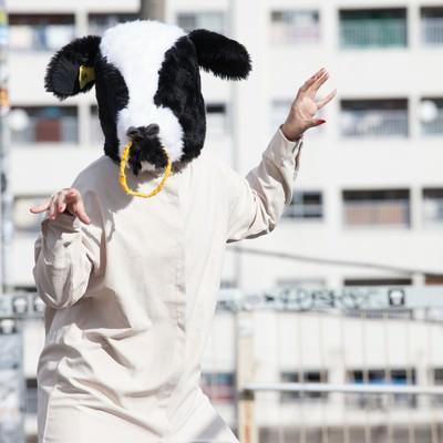 「牛のかぶりものをした挙動不審な女性」の写真素材