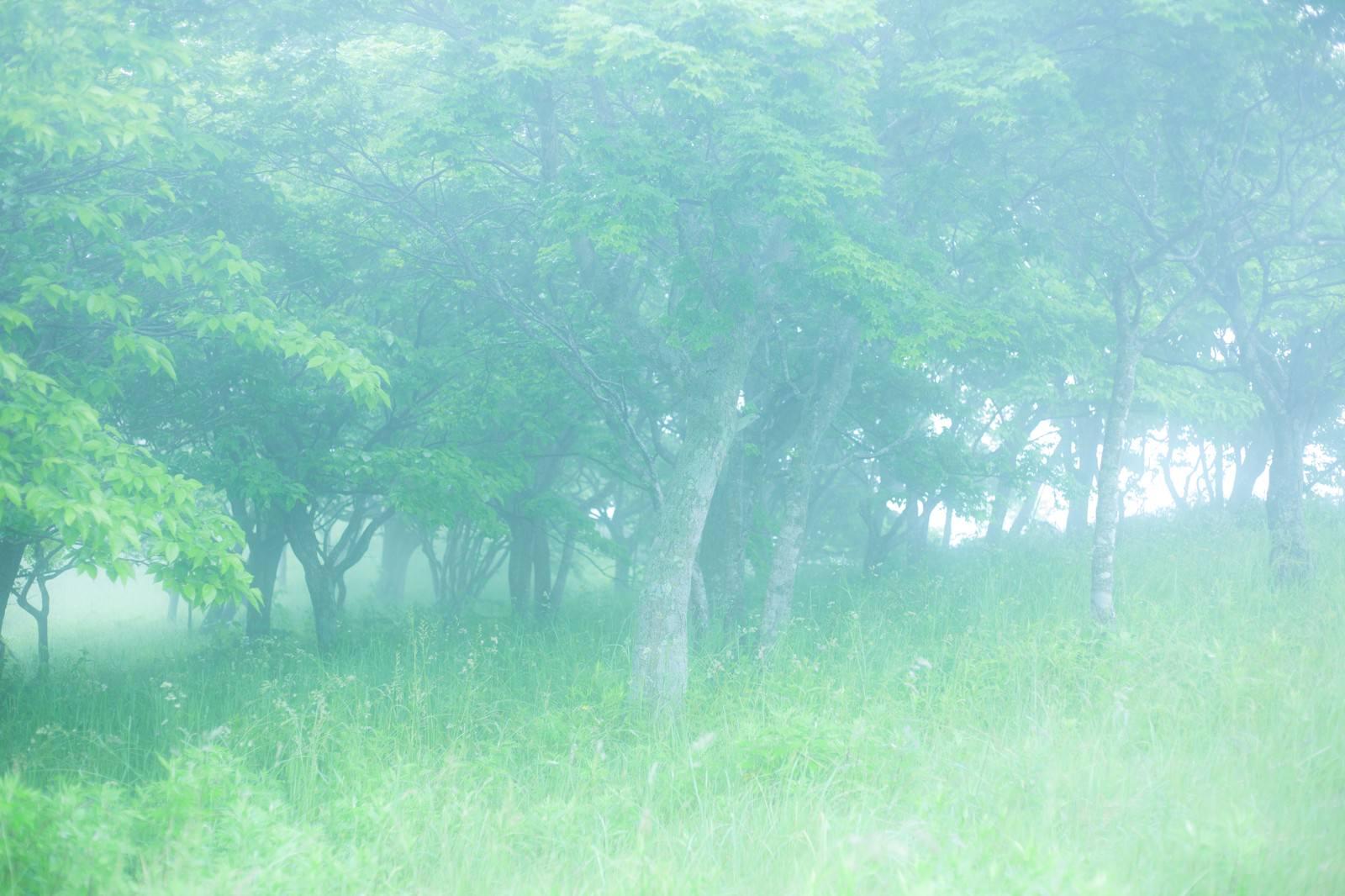 「幻想的な森を進む」の写真