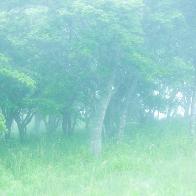 幻想的な森を進むの写真