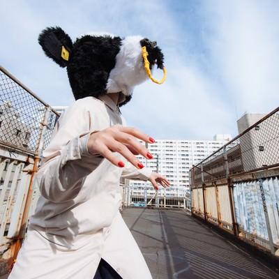 「牛襲来」の写真素材