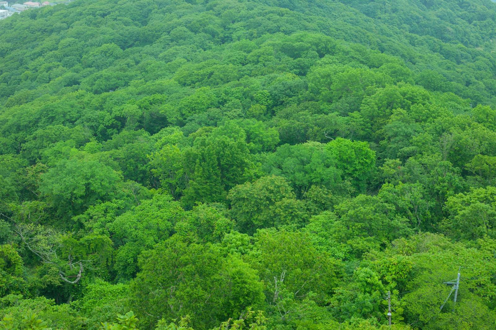 緑で覆われた樹海