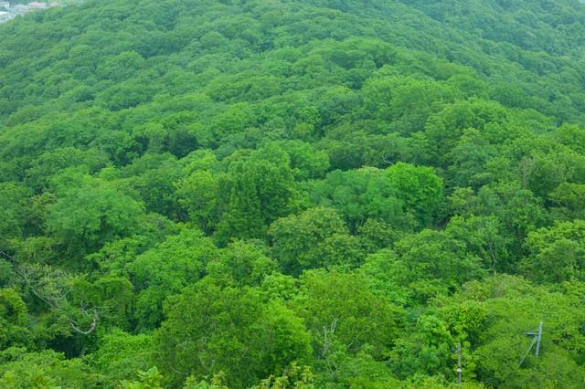 緑で覆われた樹海の写真