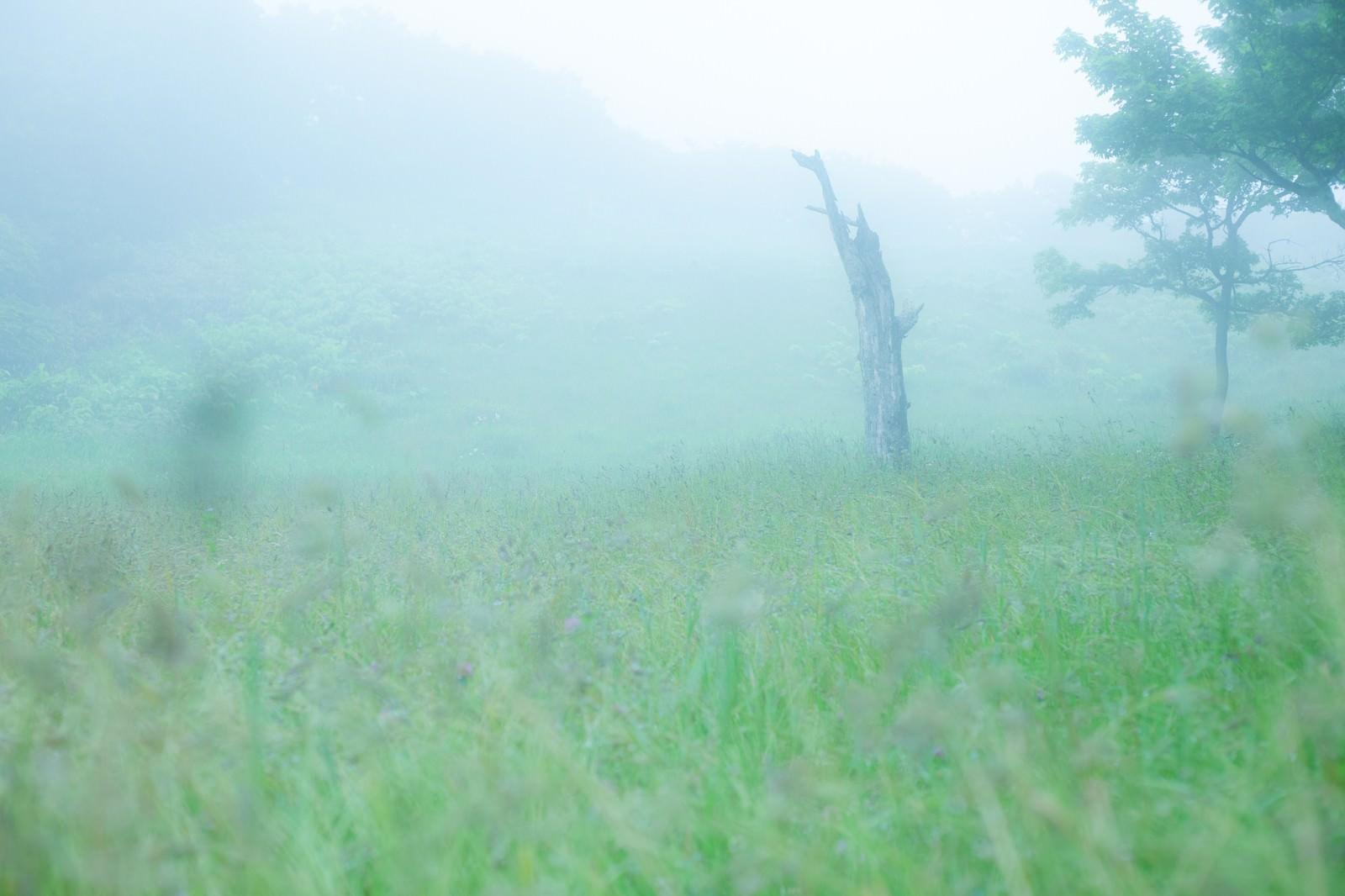 「辺り一面に靄がかかった湿原」の写真