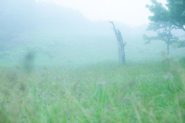 辺り一面に靄がかかった湿原の写真