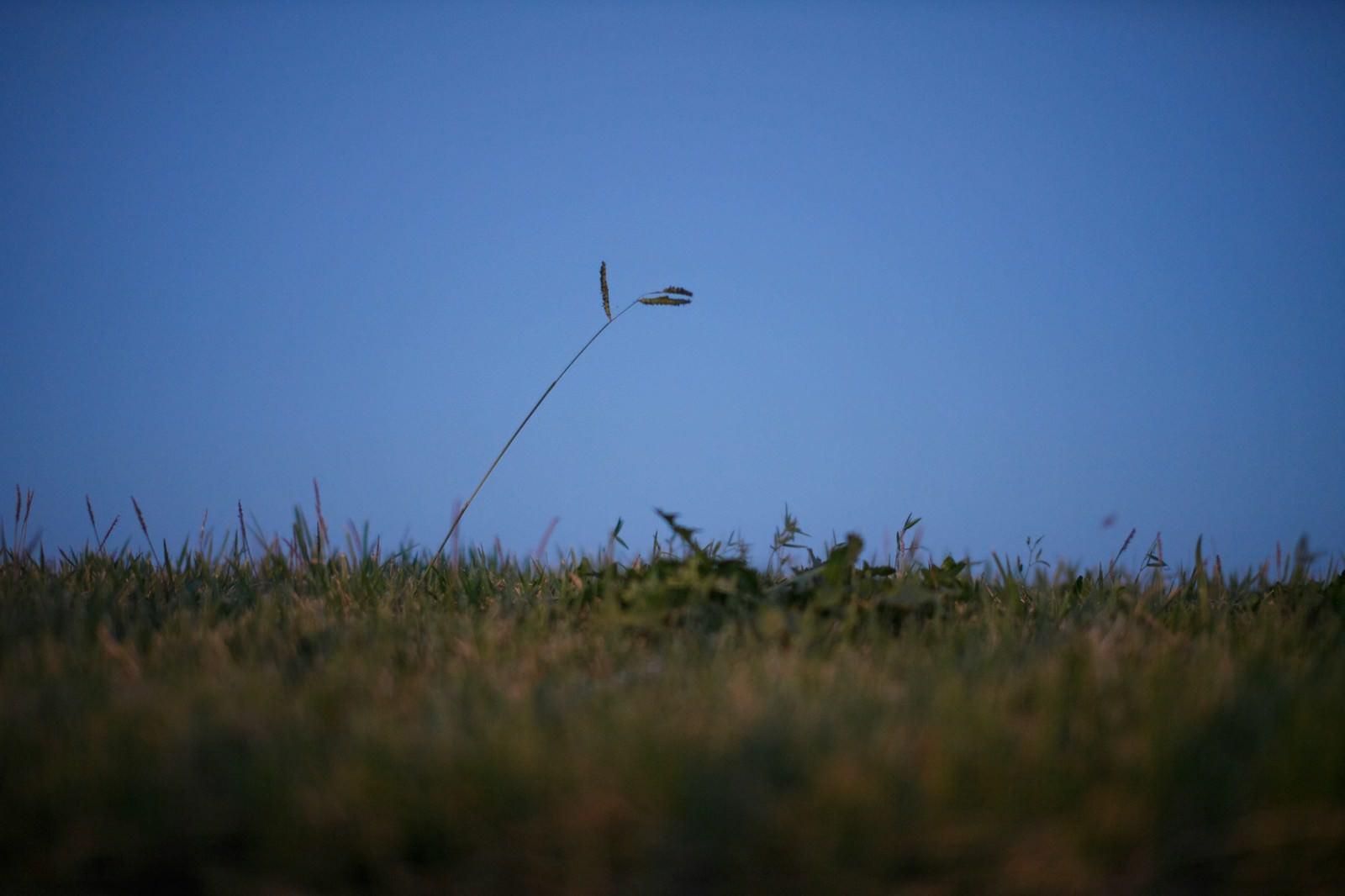 「闇夜に照らされる雑草魂」の写真