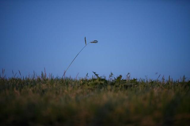 闇夜に照らされる雑草魂の写真