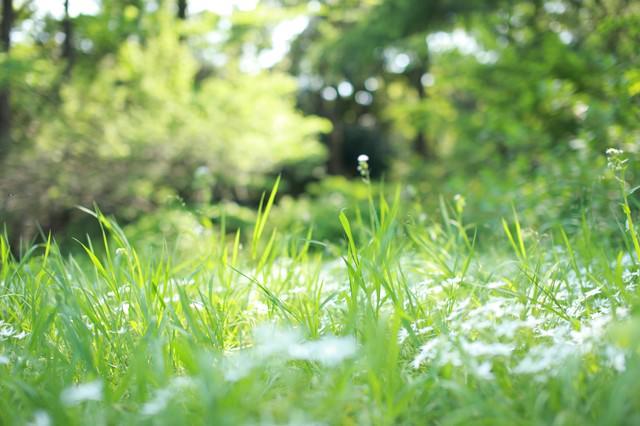 草原に迷い込んだ小人の写真