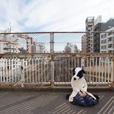 「路頭に迷い座り込むエト牛」の写真素材