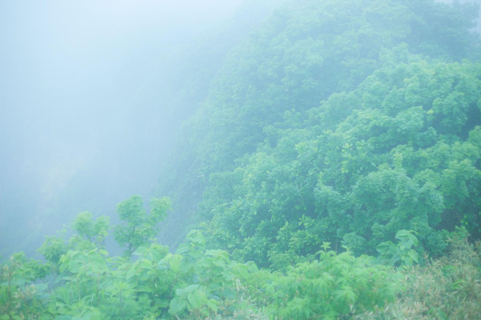 「勇者の行く手を阻む森」の写真