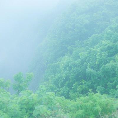 勇者の行く手を阻む森の写真