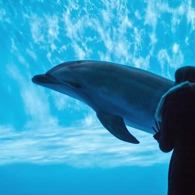 水族館のイルカと水槽越しの女性の写真