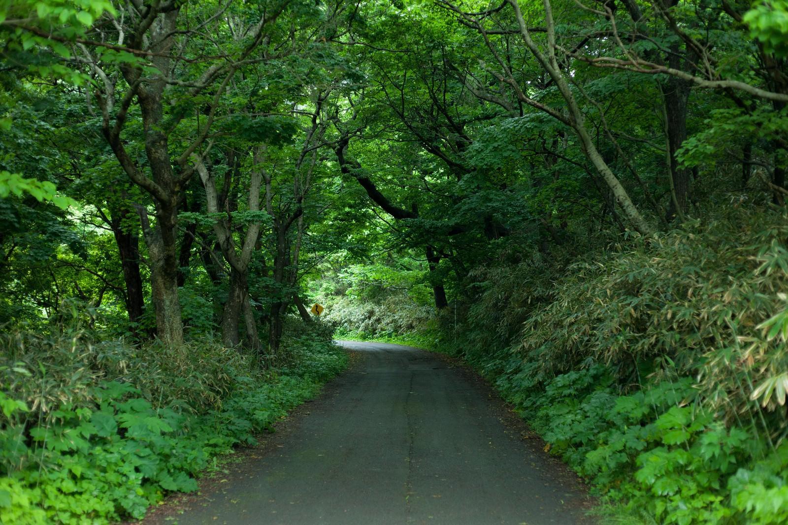 「ちょっと先が怖い林道」の写真
