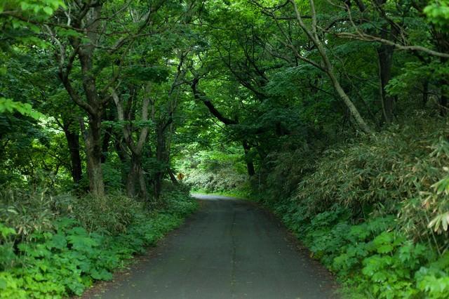 ちょっと先が怖い林道の写真