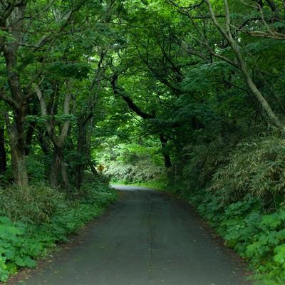 「ちょっと先が怖い林道」の写真素材