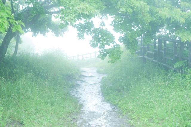 霧の先にはの写真