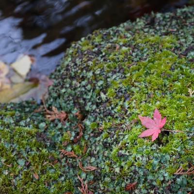 そうだ旅に行こう、秋の紅葉と苔の写真