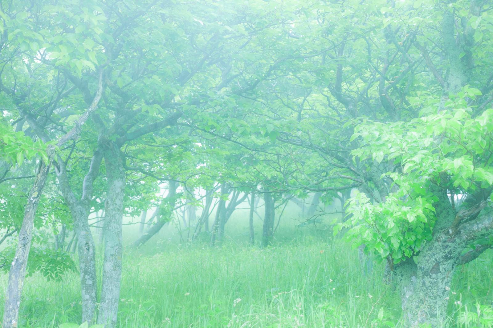 「朝露の時間、待ち合わせの場所へと向かう」の写真
