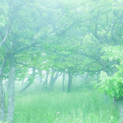「朝露の時間、待ち合わせの場所へと向かう」の写真素材