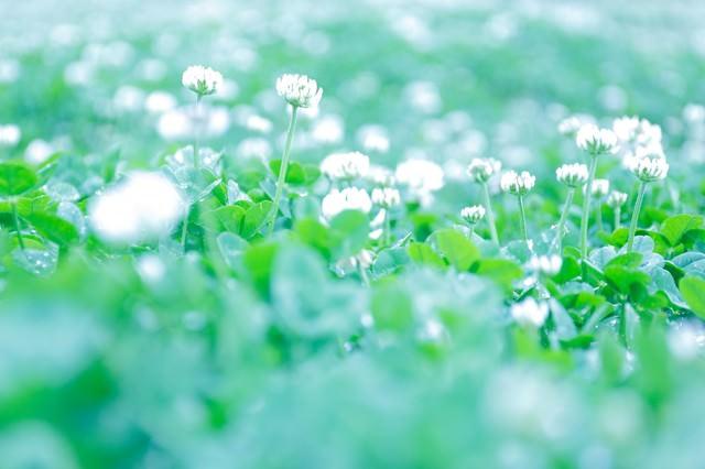 ふんわりした雰囲気の花の写真